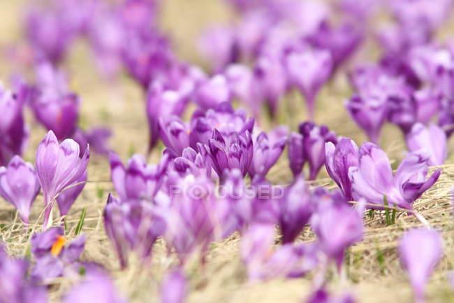 Flores silvestres en prado verde - foto de stock