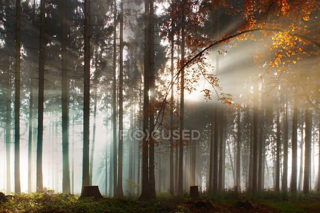 Sonne-Licht durch die Bäume — Stockfoto