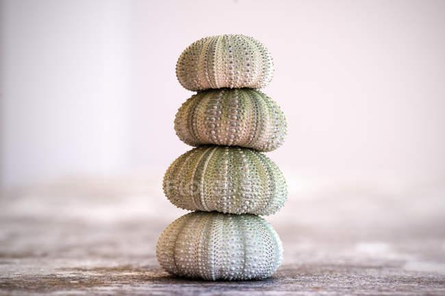 Equilibrio di gusci di riccio di mare — Foto stock
