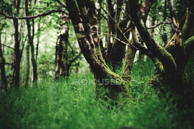 Зеленый лес на лето — стоковое фото
