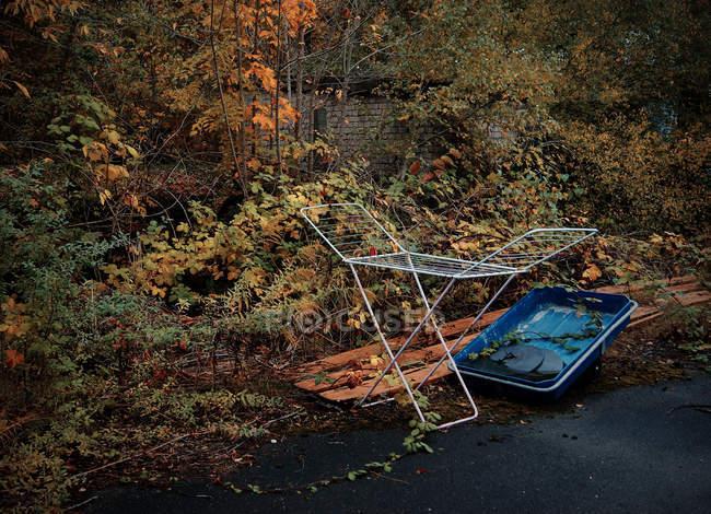 Осенние листья на деревьях и кустах — стоковое фото