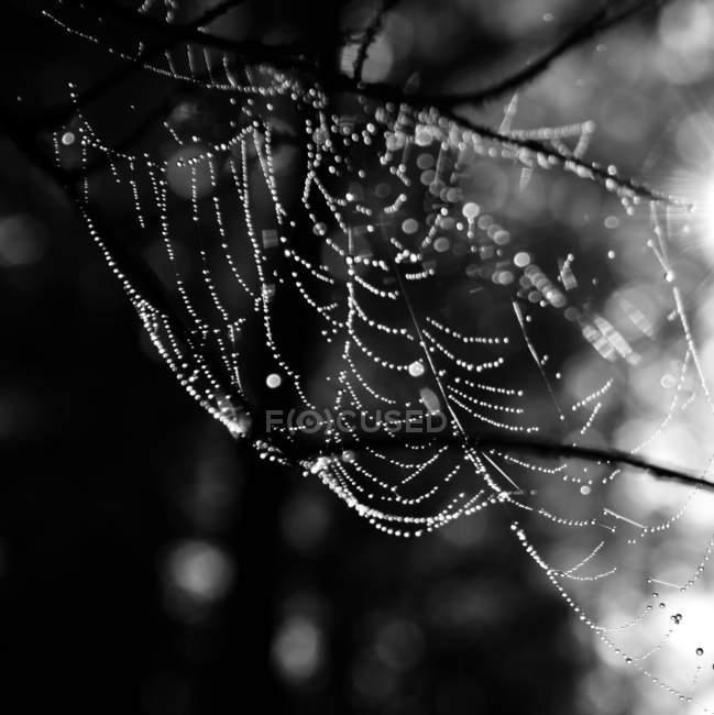 Vista da teia de aranha — Fotografia de Stock