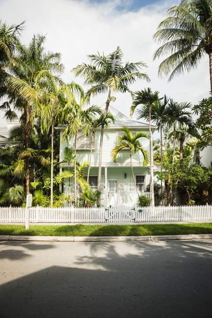 Verdes palmeiras tropicais exóticas em casa — Fotografia de Stock