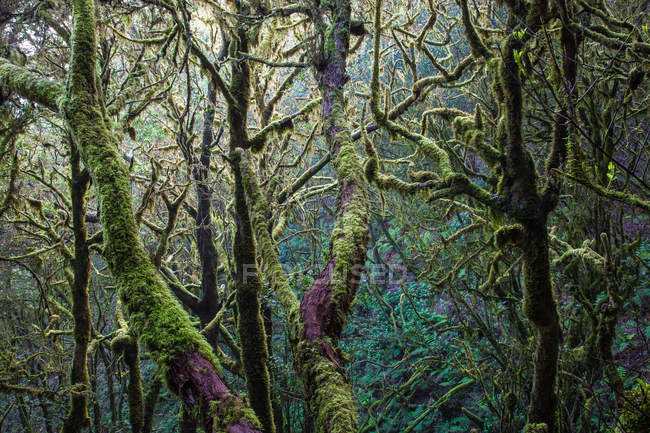 Trees trunks and branches with green moss — Stock Photo