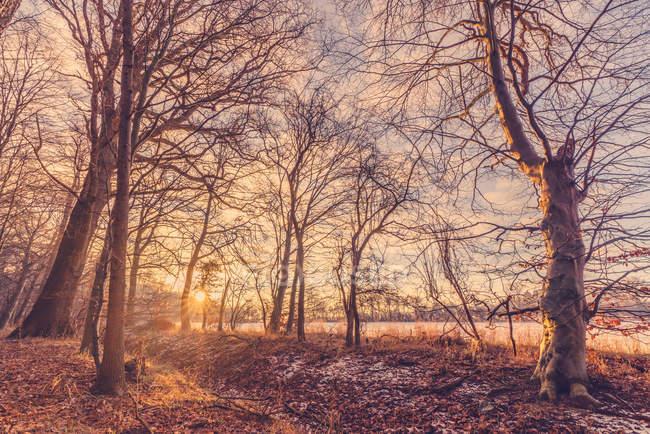 Sunrise on winter morning — Stock Photo