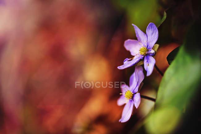 Vista de flores florecientes - foto de stock