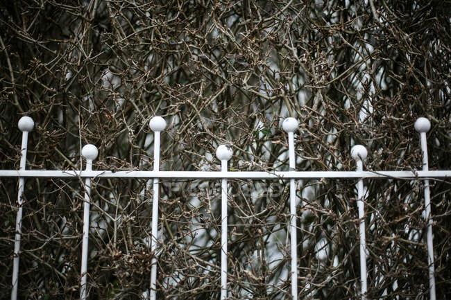 Barreira de linha de fronteira cerca, os galhos da planta em fundo — Fotografia de Stock