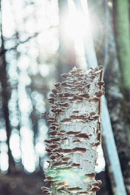 Tree fungus, close-up — Stock Photo