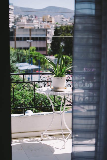 Growing houseplant in pot on table in balcony — Stock Photo