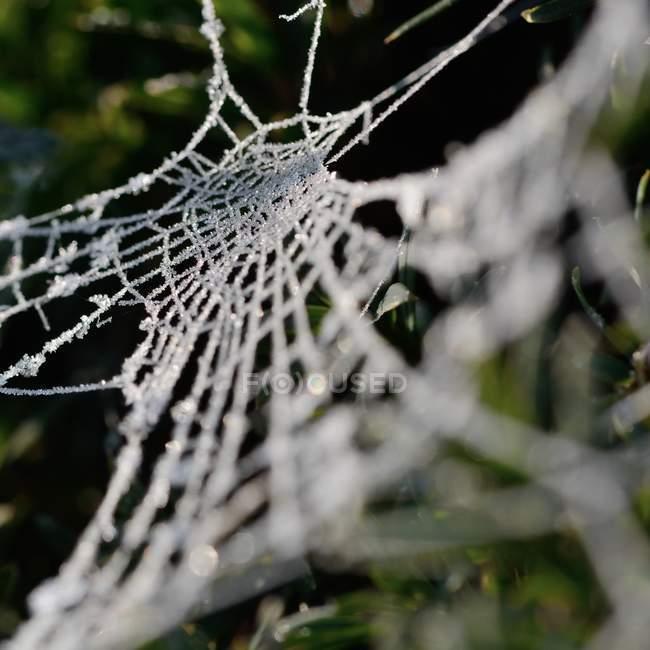 Gros plan de la toile d'araignée dans l'herbe — Photo de stock