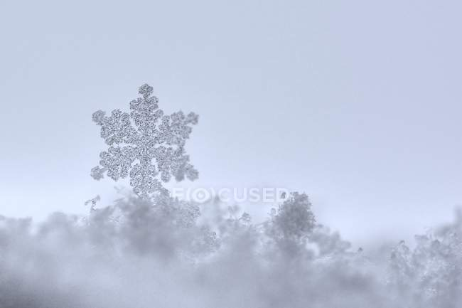 Снежинка на стекле — стоковое фото