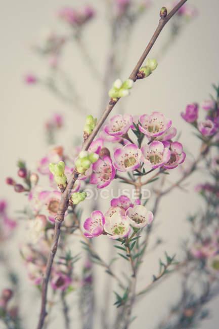 Закри подання навесні квітучі гілки дерев — стокове фото