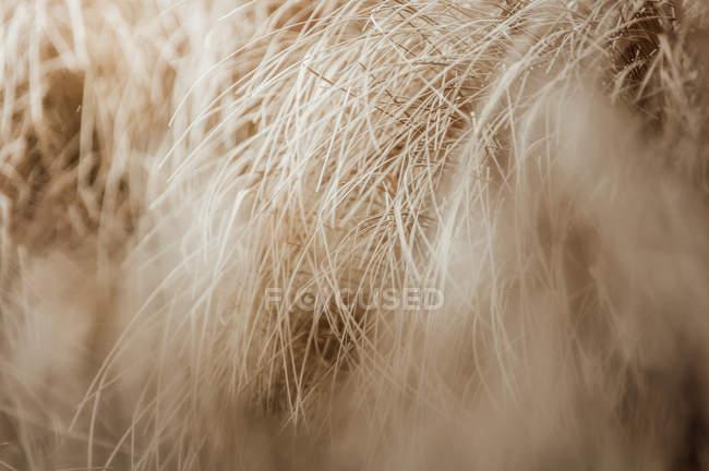 Closeup of dried grass, selective focus — Stock Photo