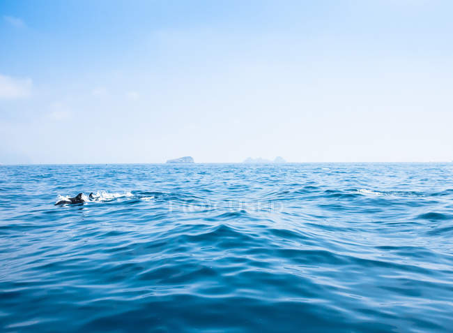 Dolphins in Sorrento sea — Stock Photo