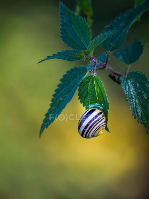 Оболочки улитки на листьях — стоковое фото