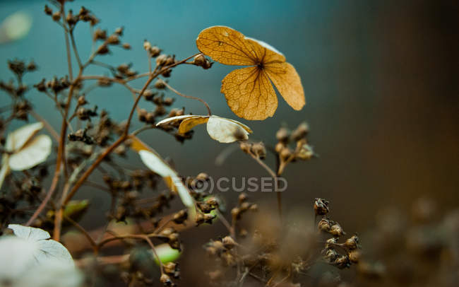 Wildflowers blooming buds — Stock Photo
