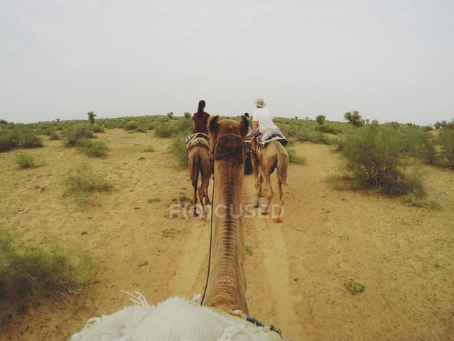 Image of: Camel Ride Travelers On Camels In Sandy Desert With Plants Stock Photo Focused Collection Travelers On Camels In Sandy Desert With Plants Beautiful Person