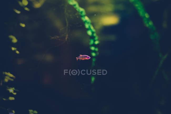 Fische schwimmen unter Wasser — Stockfoto