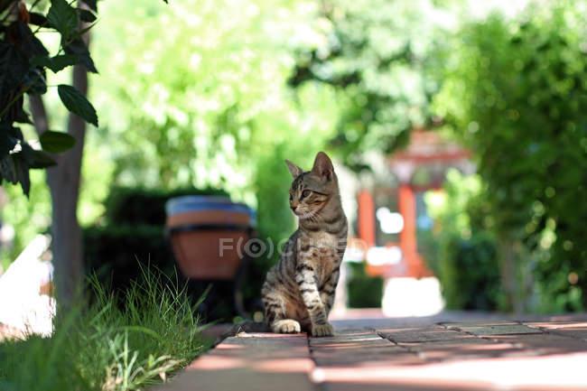 Gatinho sentado na calçada sob árvores — Fotografia de Stock