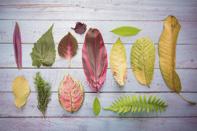 Flat lay of variety of leaves — Stock Photo