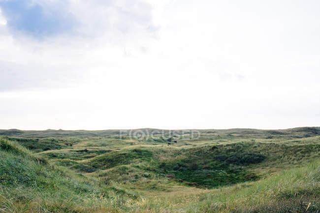 Paisagem natural, com campo de grama — Fotografia de Stock