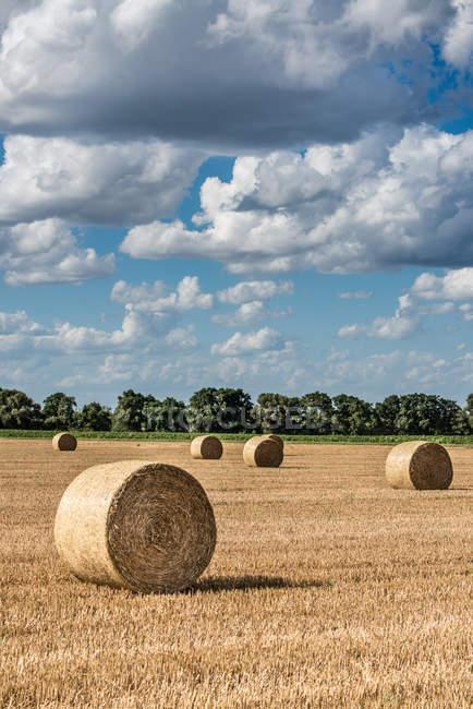 Ballots de paille en automne champ — Photo de stock