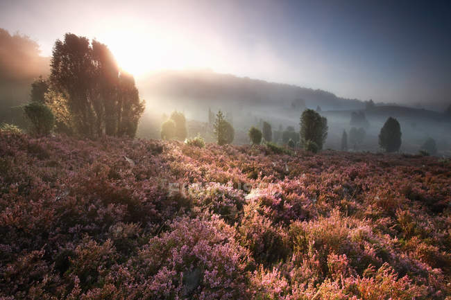 Foggy sunrise over hills — Stock Photo