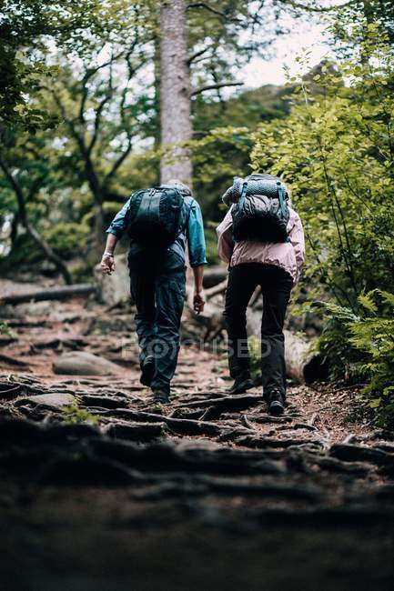 Couple hiking trough forest — Stock Photo
