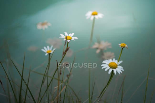 Цветы на лугу туманный — стоковое фото