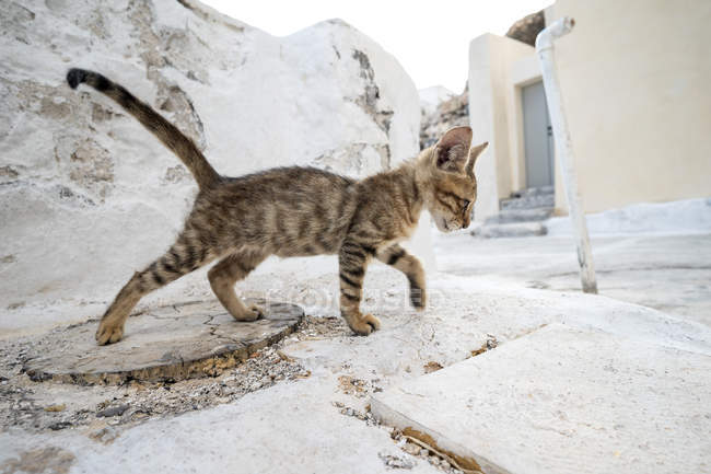 Kitten walking on concrete — Stock Photo