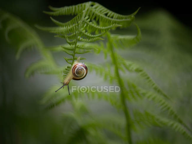 Snail slowly crawling outdoors — Stock Photo