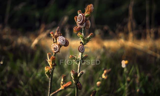 Vista ravvicinata di gusci di lumaca su colture di piante — Foto stock