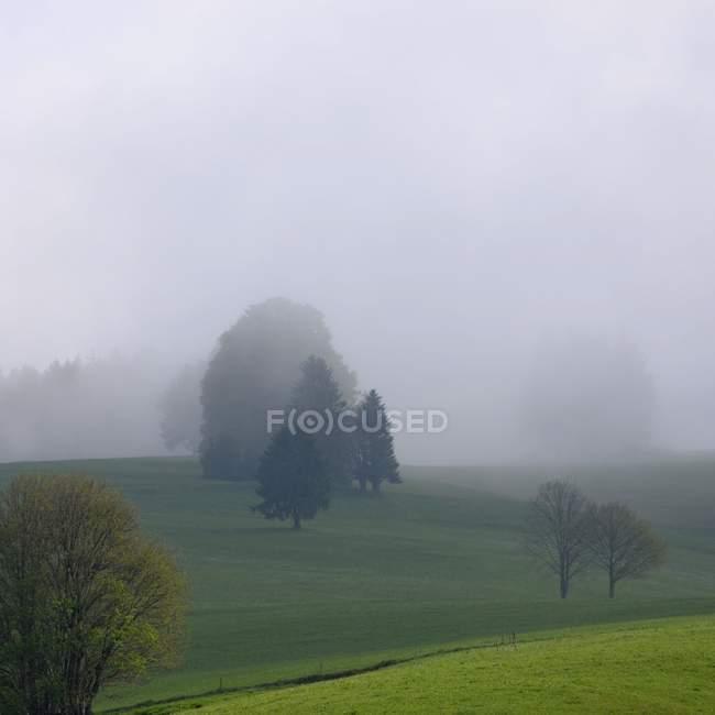 Alberi sul campo in tempo nebbioso — Foto stock
