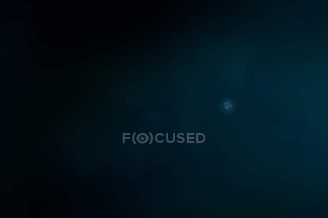 Méduse nageant sous l'eau — Photo de stock