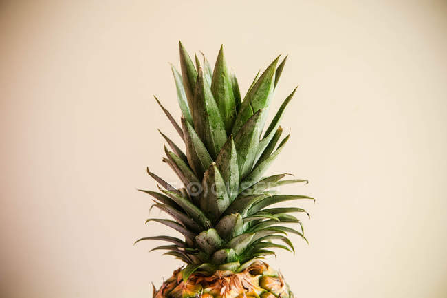 Pineapple leaves on beige background — Stock Photo