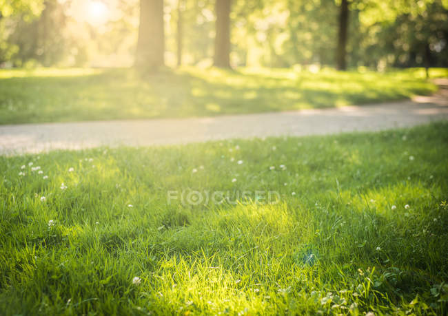 Green grass meadow and walkway — Stock Photo