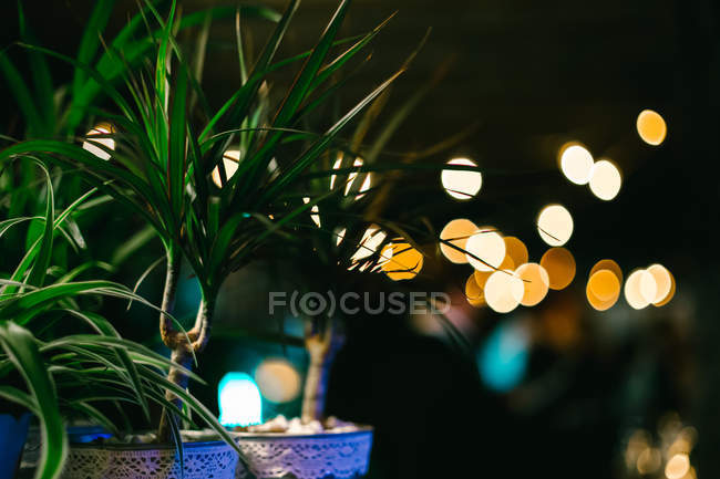 Growing green houseplants in pots at night — Stock Photo