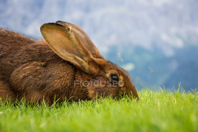 Крупным планом вид кролика в зелёный луг — стоковое фото