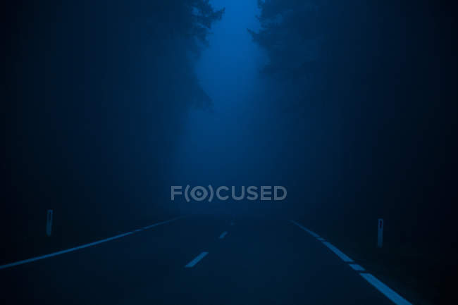 Natural scene with road through the forest in dark mist weather — Stock Photo