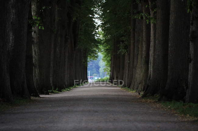 Landscape with forest alley view — Stock Photo