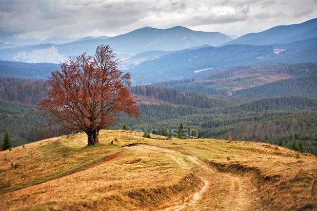 Лоун Дерево в осень в Карпатах — стоковое фото