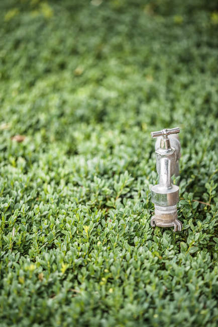 Metal tap for watering on green grass lawn — Stock Photo