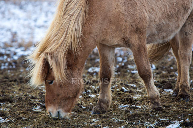 Horse animal muzzle — Stock Photo