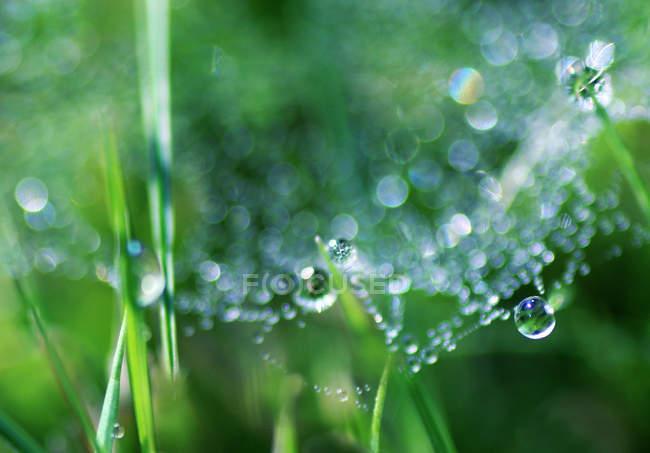 Травы и паутину, покрытые росой — стоковое фото