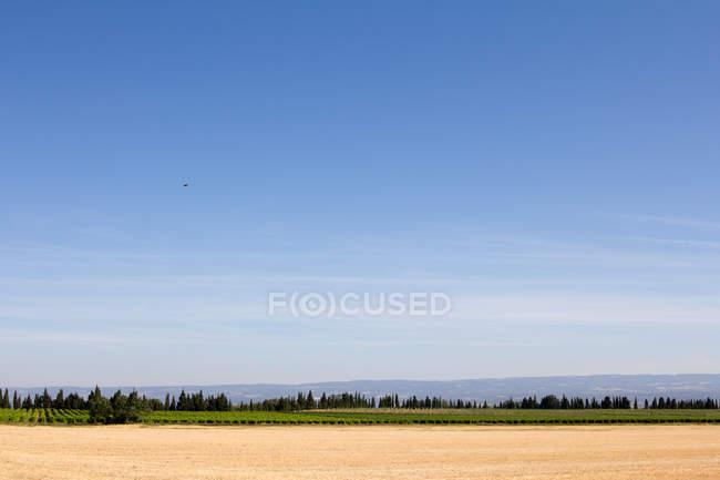 Paisaje con campo y cielo azul - foto de stock