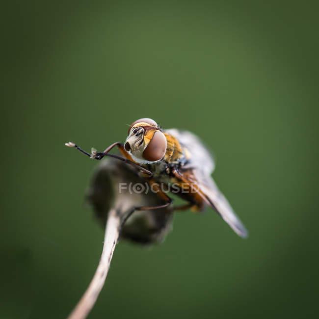 Общие летать насекомых — стоковое фото