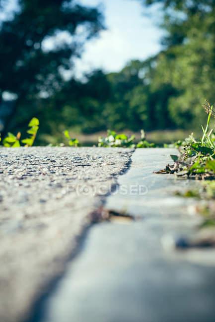 Асфальтована дорога серед зелені дерева — стокове фото