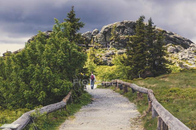Traveler person walking on road through trees — Stock Photo