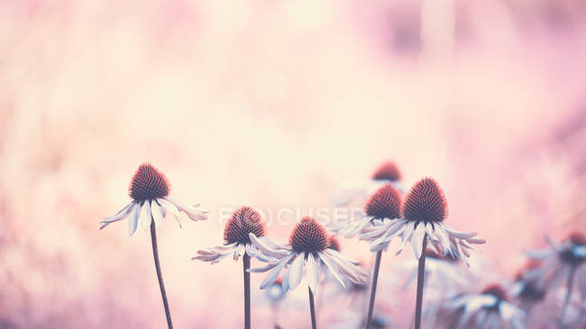 View of blossoming flowers — Stock Photo