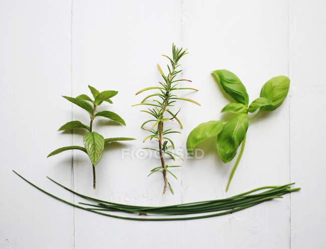 Green herbs on kitchen table — Stock Photo